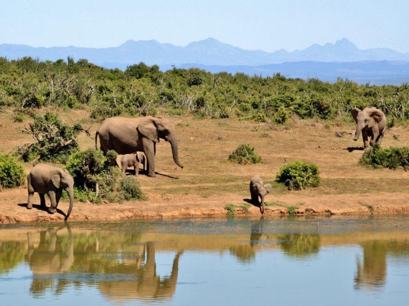 Har du övervägt Sydafrika som resmål?
